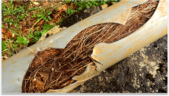 trees roots blocked in pipe